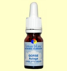 Argelaga - Gorse - Lotus Blanc - 10 ml