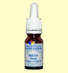 Hi hagi - Beech - Lotus Blanc - 10 ml