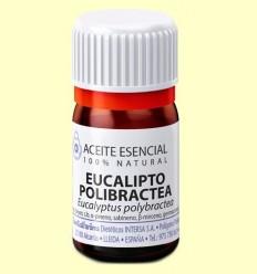 Oli Essencial Eucaliptus Polibractea - Esential Aroms - 5 ml