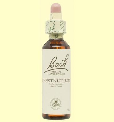 Brot de Castanyer - Chestnut Bud - Bach - 20 ml