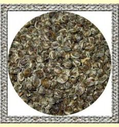 Perles de Gessamí o Ulls de Drac - Te Blanc en boletes