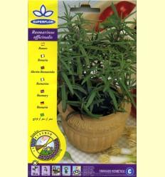 Romero (Rosmarinus Officinalis) - Llavors de Plantes Medicinals i Condiment