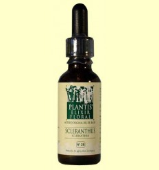 Escleranto - Scleranthus - Cultiu Ecològic - Plantis - 30 ml
