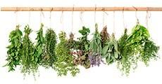 Mescles de Plantes Medicinals