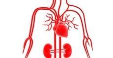 Productes sistema circulatori